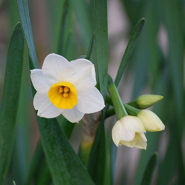 植物イメージ