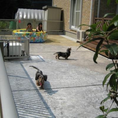 子供とペットが一緒に遊べるお庭