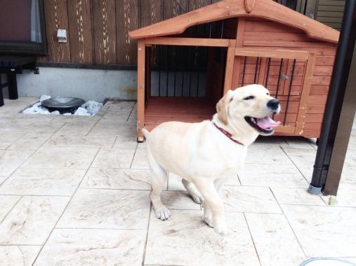 【ペット博ご来場者様限定】犬+庭リノベーションローン金利手数料無料キャンペーン!