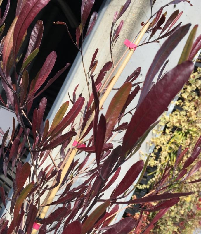 秋~冬の紅葉が美しい