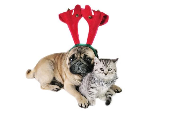 ペット博2017大阪出店記念♪大賞賞金5万円!私の犬自慢クリスマスフォトコンテストを開催します!