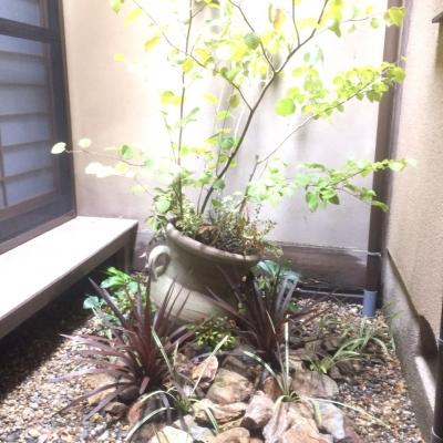 京町屋の坪庭リノベーション♪♪