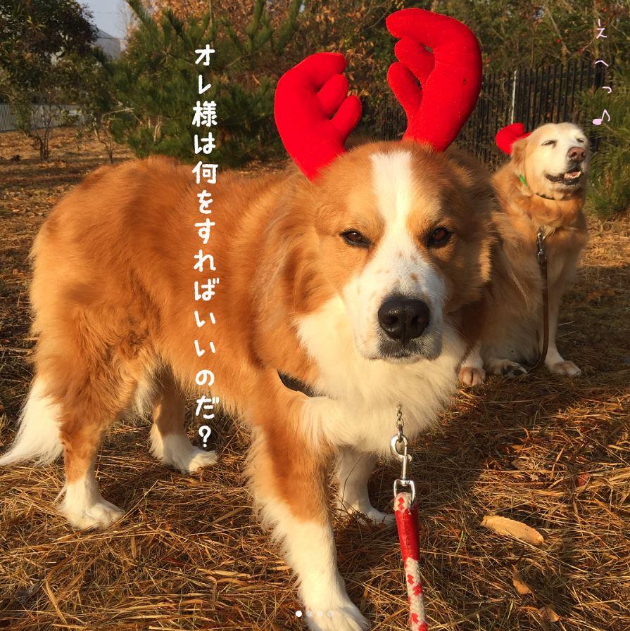 私の犬自慢 クリスマスフォトコンテスト 結果発表!