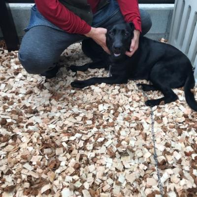 新しいご家族を迎え入れるための犬庭リノベーション