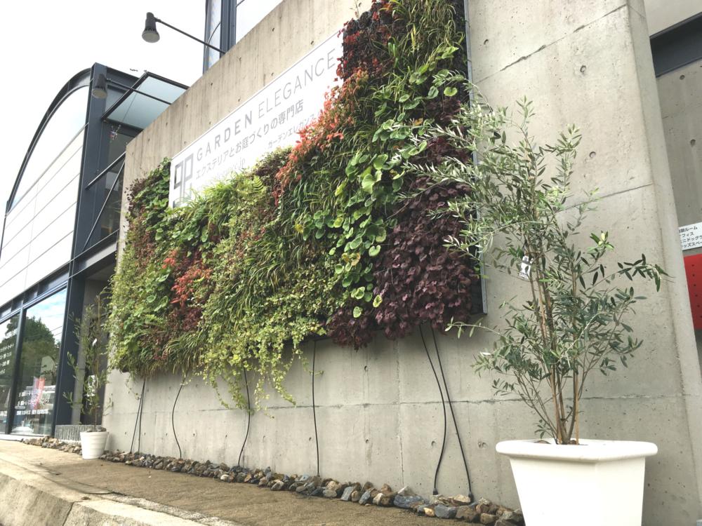 ショールーム壁面緑化リニューアル工事のお知らせ