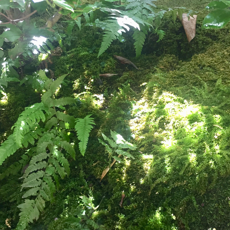 茶の花と苔