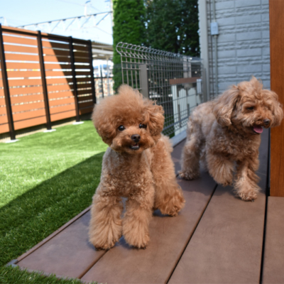 植栽のお手入れからサヨナラ!スッキリとさせることで愛犬達が楽しめるお庭に!